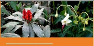 Traditional Knowledge of Medicinal Plants in Bangladesh